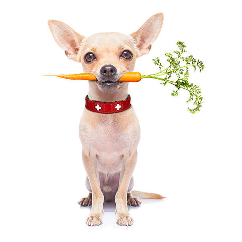 Chihuahua Foods To Avoid