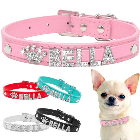 personalized chihuahua collar