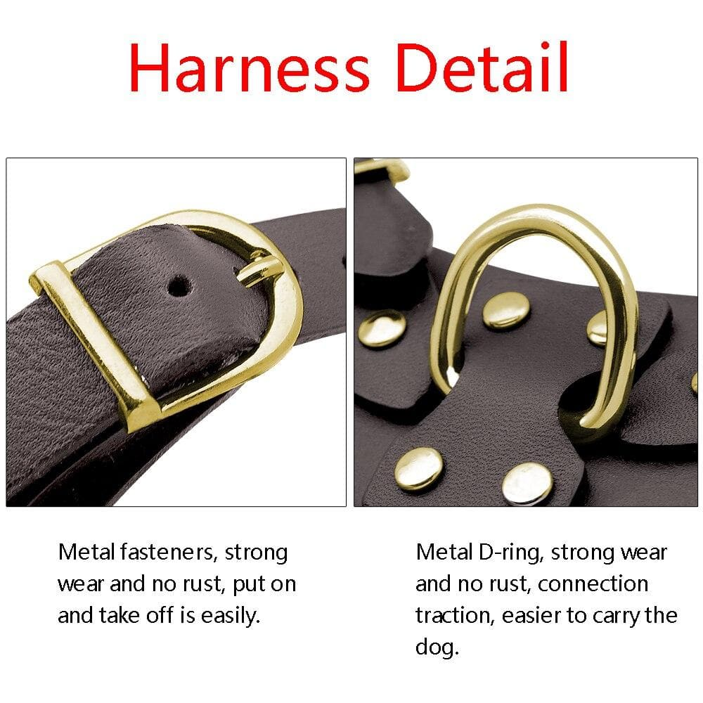 Fancy Leather Harness and Leash Set - Chihuahua We Love