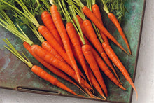 Load image into Gallery viewer, Heirloom Organic Moonraker Carrot Seeds