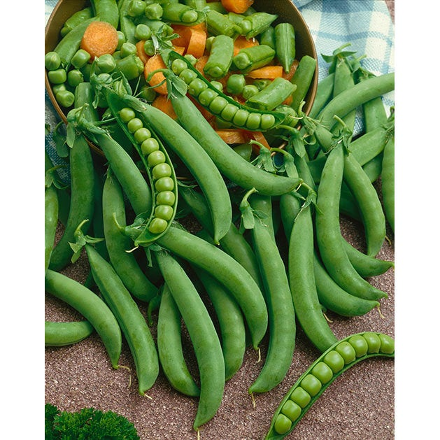 Organic Green Arrow Bush Peas Seeds