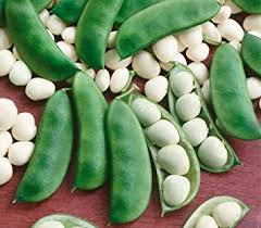 Heirloom Organic Henderson Lima bean Seeds