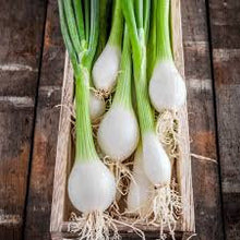 Load image into Gallery viewer, Heirloom Organic White Lisbon Bunching Onion Seeds