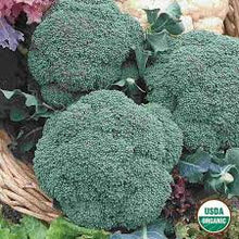 Load image into Gallery viewer, Heirloom Organic Calabrese Broccoli Seeds