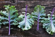 Load image into Gallery viewer, Heirloom Organic Red Russian Kale Seeds