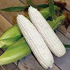 Heirloom Organic Civil War Corn/ Boone County White Corn Seeds