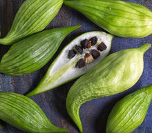 Load image into Gallery viewer, Rare Organic Heirloom Caigua Seeds (Aka Slipper Gourd, Achocha,  Cyclanthera pedata, stuffing cucumber) www.hardyorganics.com