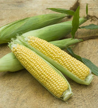 Load image into Gallery viewer, Heirloom Organic Golden Cross Bantam Sweet Corn Seeds
