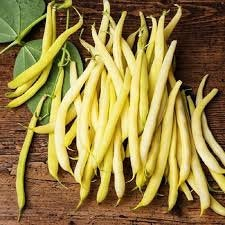 Heirloom Organic Cherokee Wax yellow bush bean seeds
