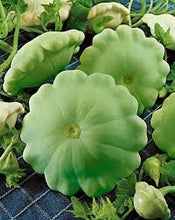 Load image into Gallery viewer, Heirloom Organic Peter Pan Summer Squash Seeds Award winning Squash!