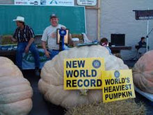 Load image into Gallery viewer, The world's largest pumpkins! Non gmo Organic Dill's Atlantic GIANT Pumpkin seeds pack