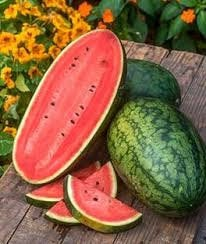 Heirloom Organic Georgia Rattlesnake Watermelon seeds