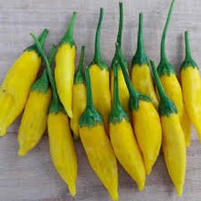 Load image into Gallery viewer, Rare Heirloom Organic Lemon Dream Sweet Pepper Seeds