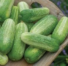 Organic Picklebush Cucumber Seeds