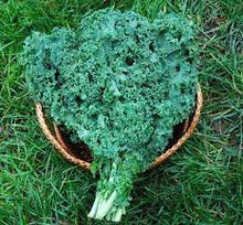 Load image into Gallery viewer, Heirloom Organic Dwarf Siberian Improved Kale Seeds