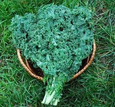 Heirloom Organic Dwarf Siberian Improved Kale Seeds