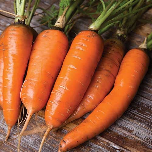 Heirloom Organic Danvers Half Long Carrot Seeds