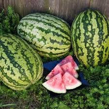 Load image into Gallery viewer, Heirloom Organic Klondike Blue Ribbon Striped Watermelon Seeds