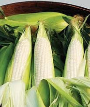 Load image into Gallery viewer, Organic Sweet Opal Sweet Corn Seeds