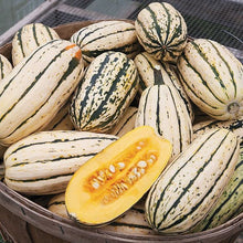 Load image into Gallery viewer, Heirloom Organic Delicata Winter Squash Seeds (AKA Sweet Potato Squash Seeds, Peanut squash, Bohemian squash)