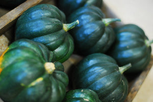 Heirloom Organic Royal Ace Acorn Squash Seeds