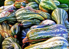 Load image into Gallery viewer, Heirloom Organic Green Striped Cushaw Pumpkin Seeds