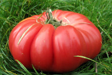 Load image into Gallery viewer, Heirloom Organic Pink Tiffen Mennonite Tomato Seeds