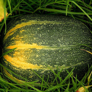 Rare Heirloom Citrouille De Touraine Tours Pumpkin Seeds