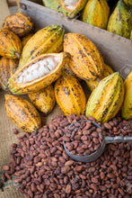 Load image into Gallery viewer, Heirloom Organic Theobroma Cacao Tree Seeds (Chocolate Tree, Cocoa Bean Tree) Raw Food Grade Dry