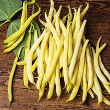 Load image into Gallery viewer, Heirloom Organic Yellow Pencil Pod Bush Bean Seeds