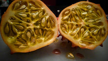 Load image into Gallery viewer, Organic Heirloom Horned Melon Seeds (Cucumis metuliferus, Kiwano, Jelly Melon, African Horned Cucumber.) Seeds Rare