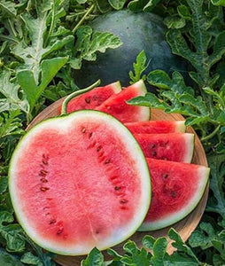Organic Heirloom Blacktail Mountain Watermelon Seeds