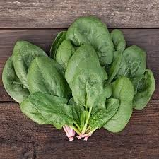 Heirloom Organic Whale Spinach Seeds