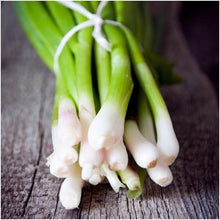 Load image into Gallery viewer, Heirloom Organic Tokyo Long White Onion Seeds