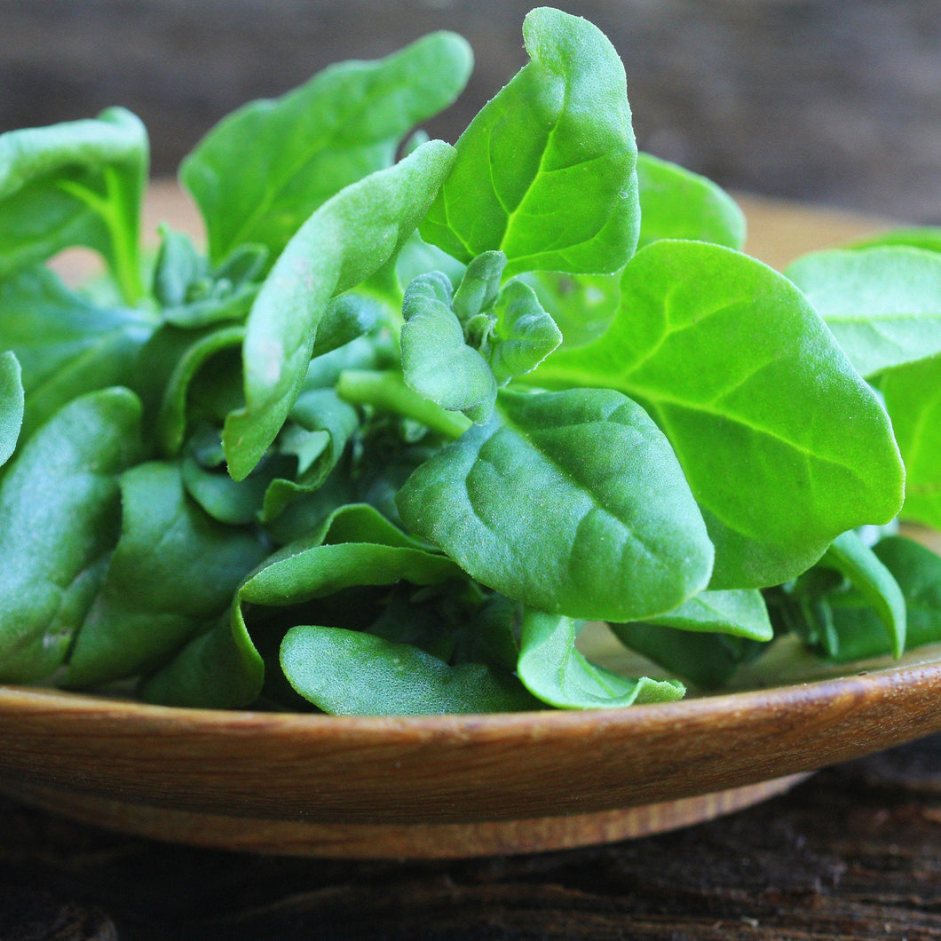 Heirloom Organic New Zealand Spinach Seeds