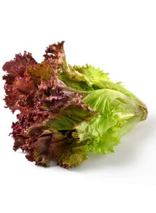 Heirloom Organic New Red Fire Lettuce Seeds