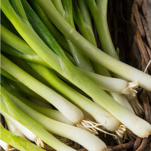 Heirloom Organic Tokyo Long White Onion Seeds