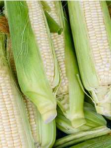 Heirloom Organic Trucker's Favorite White Corn Seeds