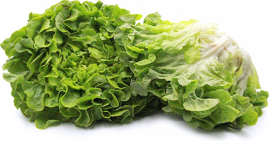 Heirloom Organic Royal Oakleaf Lettuce Seeds