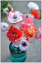 Load image into Gallery viewer, Heirloom Mix Shirley Poppy Seeds
