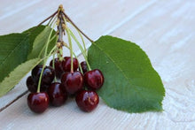 Load image into Gallery viewer, Heirloom Black Tartarian Cherry Tree Seeds   aka Prunus avium and many other fruit trees and exotic plants live and rare seeds