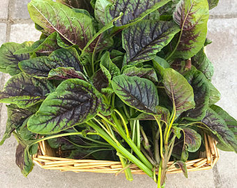 Heirloom Organic Red Stripe Amaranth Seeds Aka Chinese Spinach - Callaloo - Amaranthus viridus - Edible Amaranth