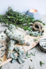 Load image into Gallery viewer, Heirloom Organic Sage Seeds  Aka Salvia Officinalis Medicinal Herbs, Garden Sage, Smudging, Green Sage, Common Sage, Smudge sticks