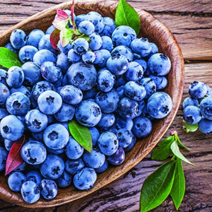 Organic Heirloom Blueberry Bush Seeds - Perfect for potting for urban gardening or apartment plants or beautiful decor for landscaping!