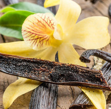 Load image into Gallery viewer, Heirloom Organic Vanilla Vine Vanilla planifolia Seeds  !Vanilla bean Orchid seeds spices and herbs on site! www.hardyorganics.com