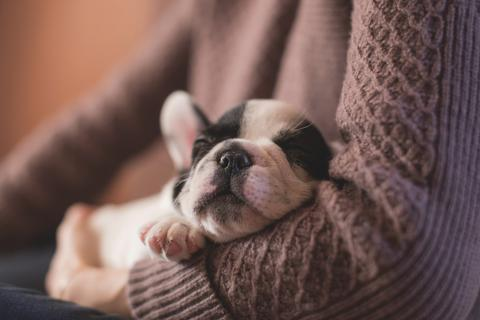 14 Happy Dogs Show You the Right Way to Relax - truMedic