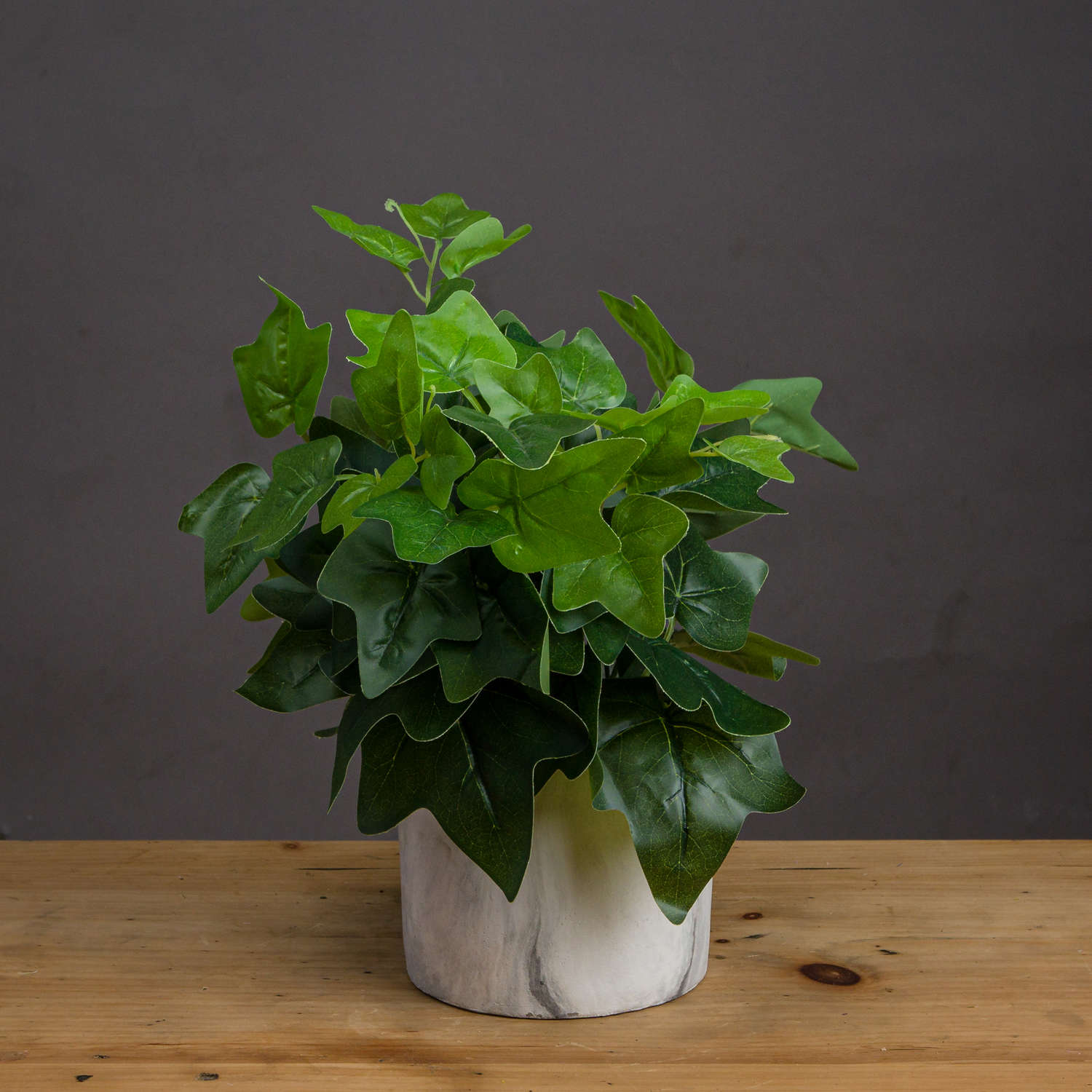 Potted Ivy House Plant