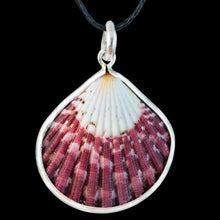 Load image into Gallery viewer, Shell in Silver - Zen Gifts NZ