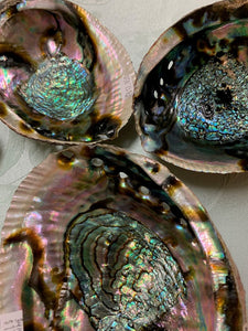 Abalone Mother of Pearl Shells