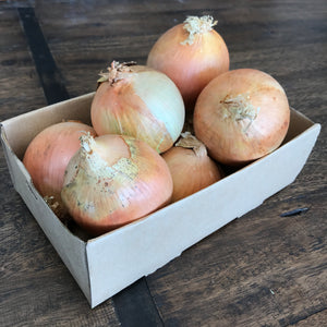 Onion (brown)